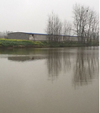 鼎城区水月村一养猪场污染环境
