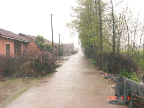 绿树林中,一条条农村水泥路,平平展展地通向远方,好一派乡村田园风光